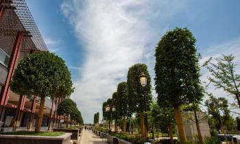 Oaza verde din proiectul mixt Iulius Town Timișoara, investiție în valoare de 8,7 milioane de euro
