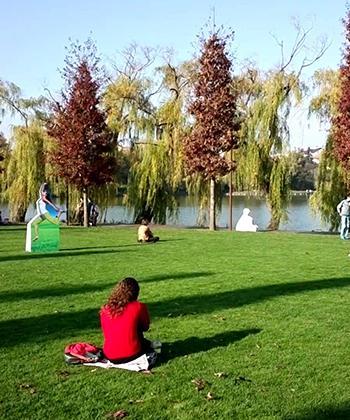 Peste 18.000 de arbuşti ornamentali vor înfrumuseţa spaţiul verde din proximitatea Lacului de Vest